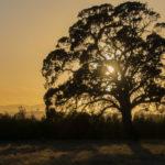C-Australia Sunrise