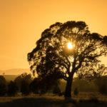 C-Australia.com Sunrise
